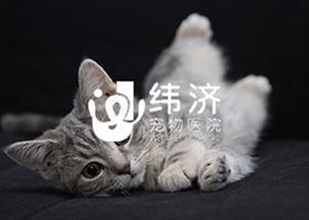 赢众宠物用品-宠物服务行业网站|GDWEIJI.COM